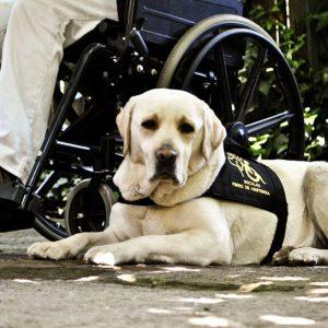 Persona en silla de ruedas acompañado de su perro de asistencia.